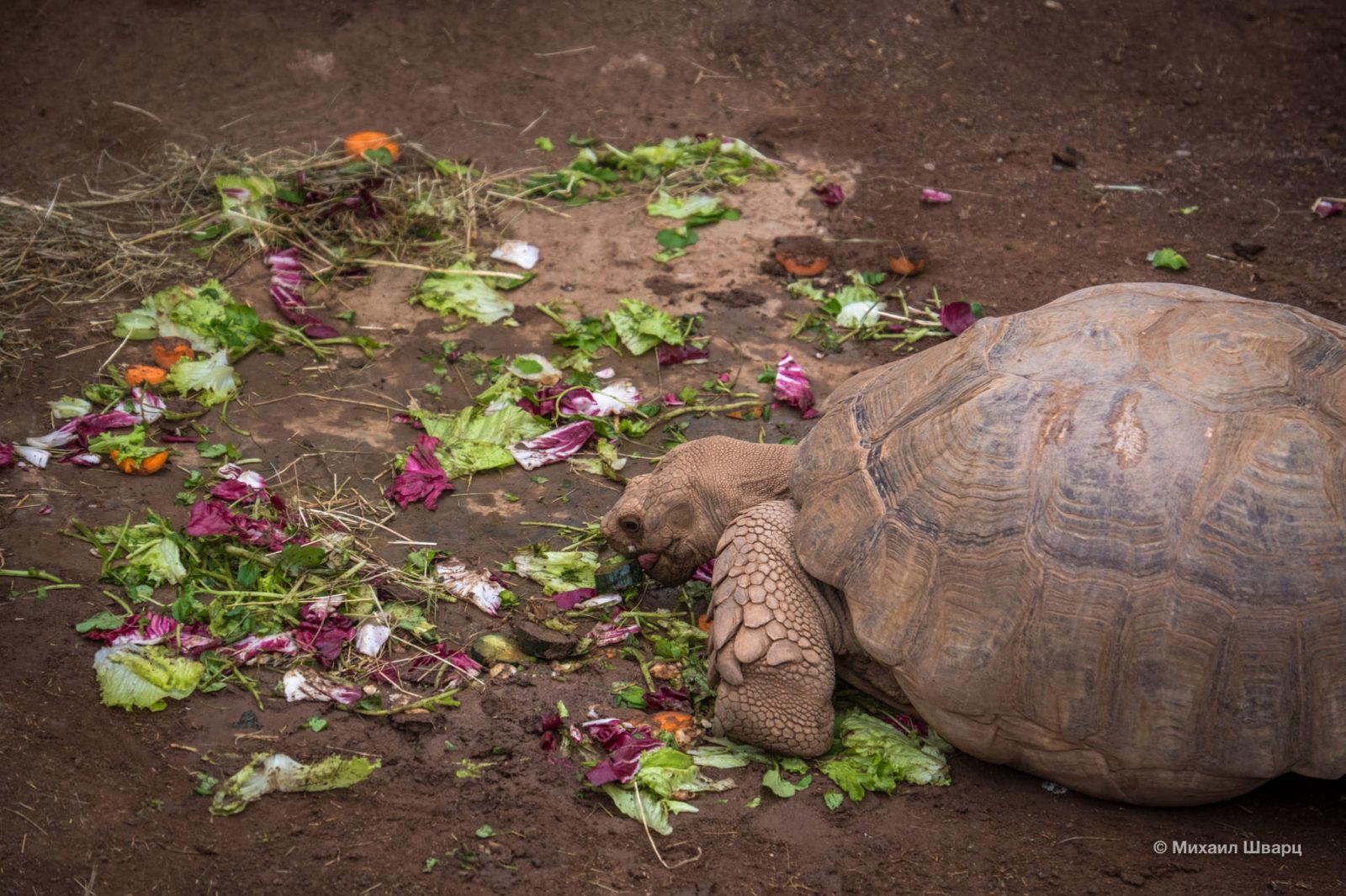 Мудрая черепаха за обедом