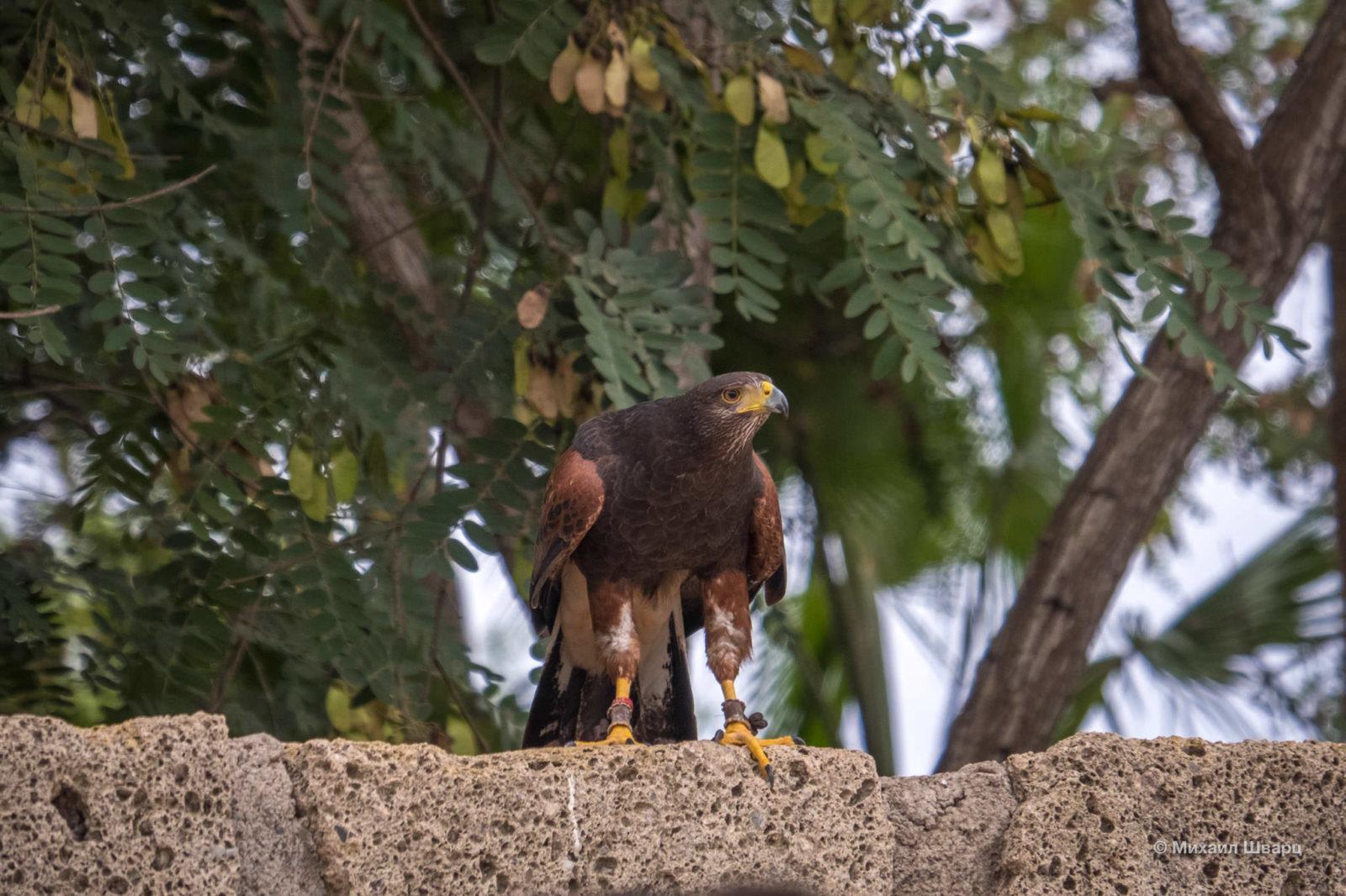 Хищная стремительная птица