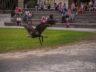 Парк орлов 12