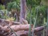 Парк орлов 40