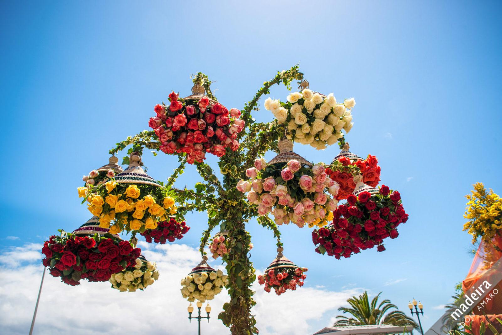 Всё в цветах (фото: Don Amaro)