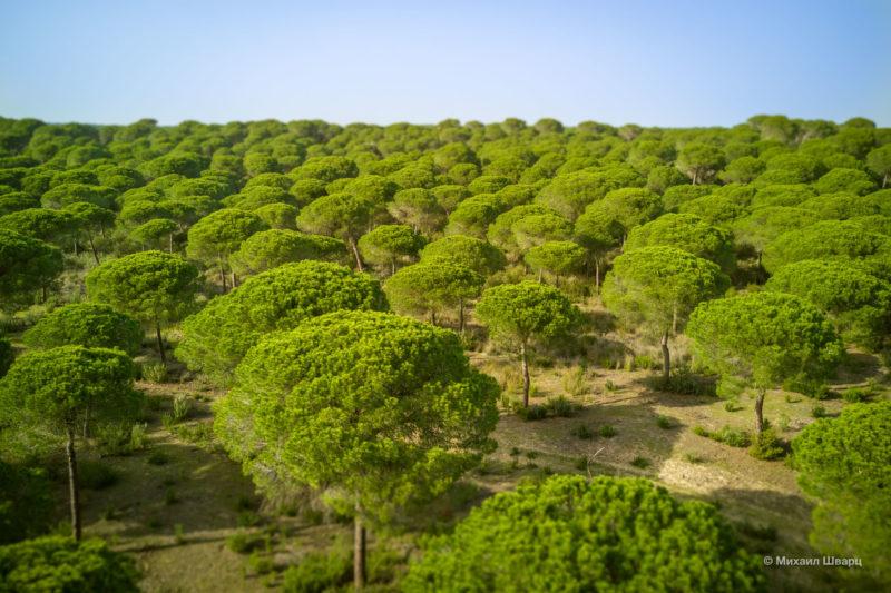 Национальный парк Доньяна (Parque Nacional de Doñana)