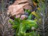 Ботанический сад Cap Roig 12