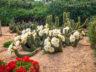 Ботанический сад Cap Roig 10