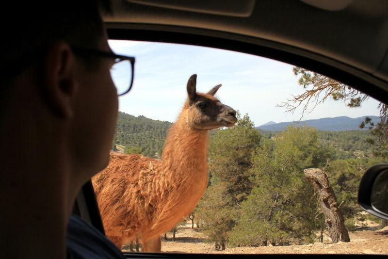 Идея небольшого путешествия в Испанию 15