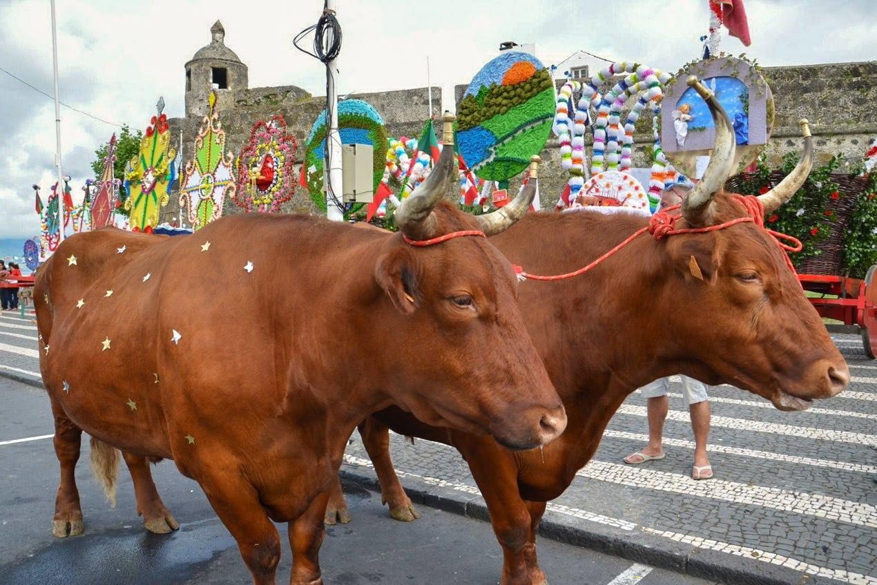 Праздник Святого Духа в Понта-Делгада (фото: Luis Coixao)