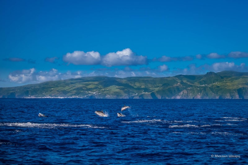 В местных водах очень много дельфинов