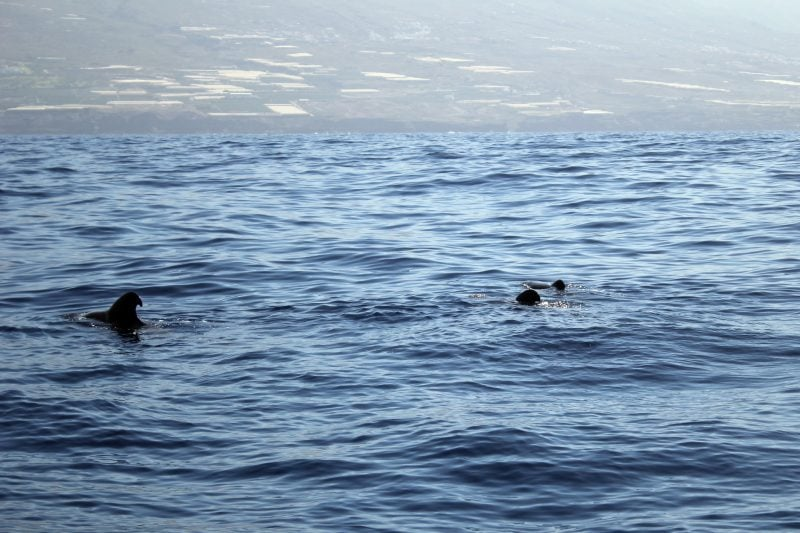 В гости к дельфинам и китам на пиратском корабле 2