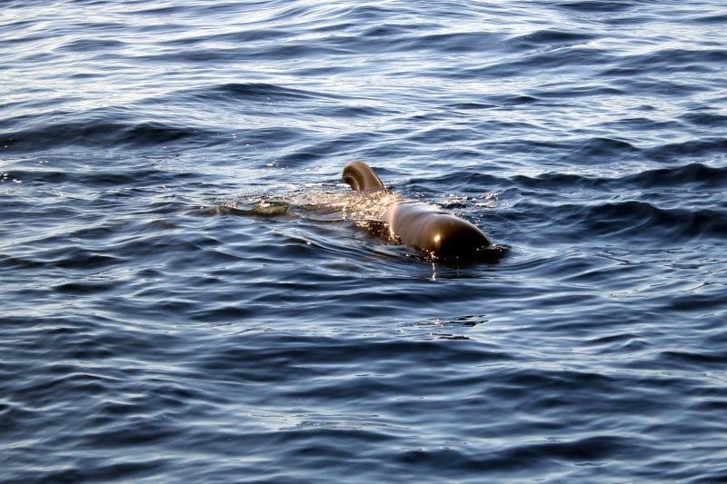 В гости к дельфинам и китам на пиратском корабле 12