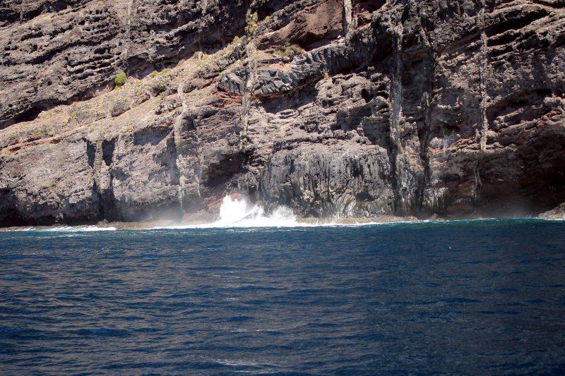 В гости к дельфинам и китам на пиратском корабле 15