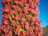 Ищем цветы Тахинасте у Тейде 4