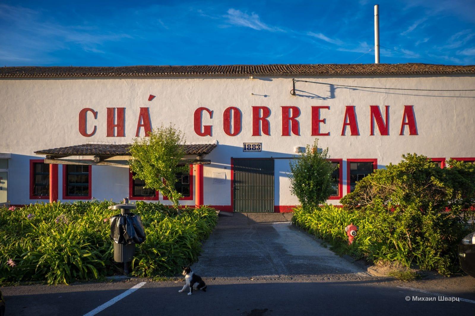 Чайная фабрика Ча Горреана (Fábrica de Chá Gorreana)