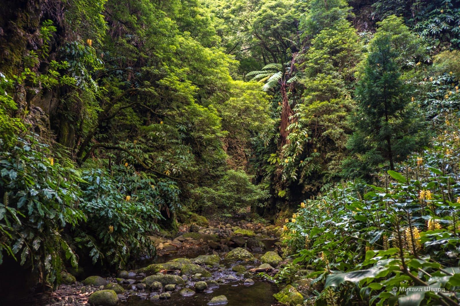 Вечнозелёные лиственные леса