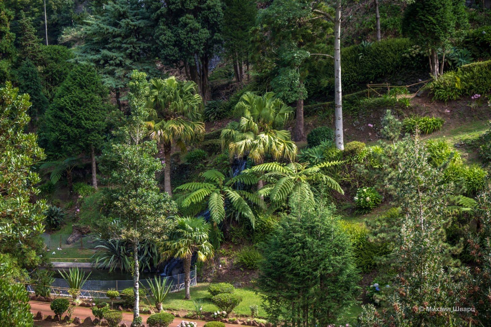 Вечнозеленая растительность