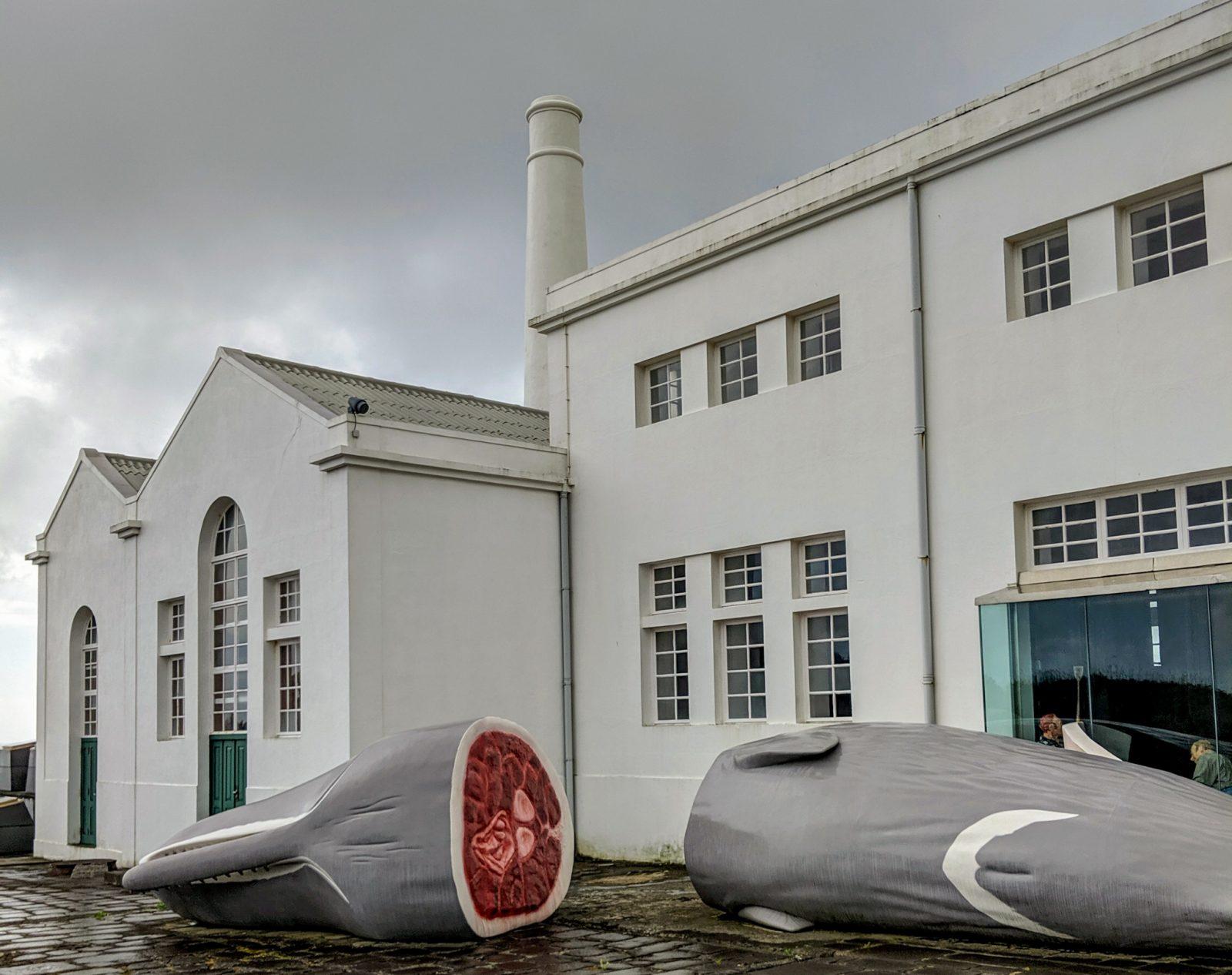 Музей китобоев и разрезанный кит