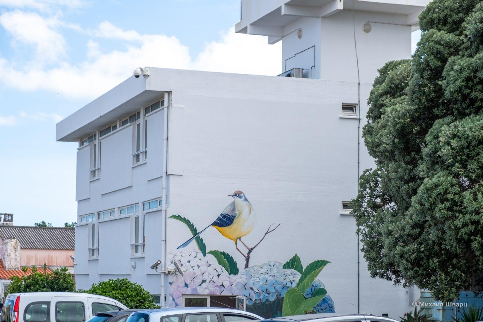 Птичка на стене дома