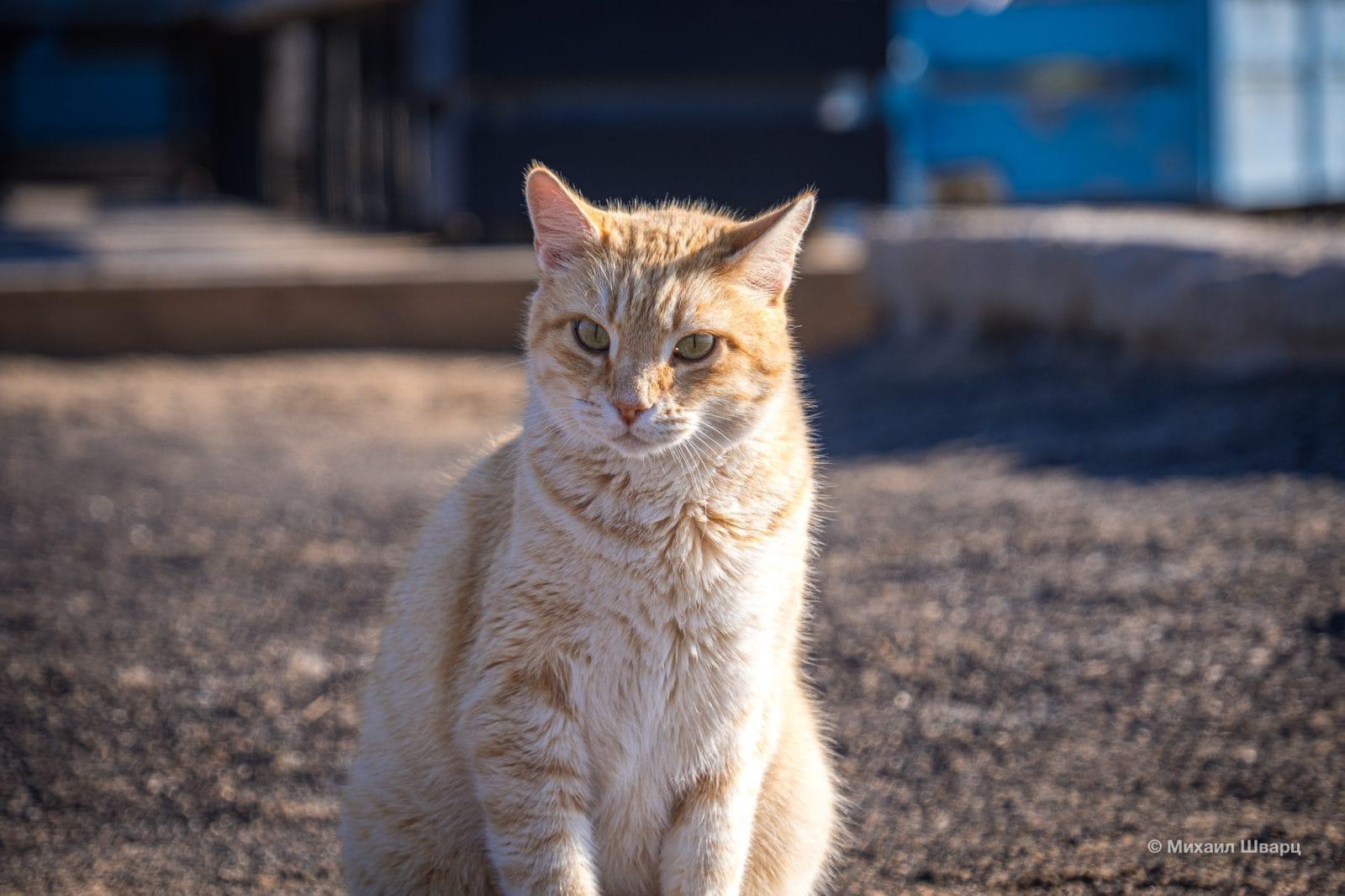 Уличный котик, житель города Калета-де-Фусте