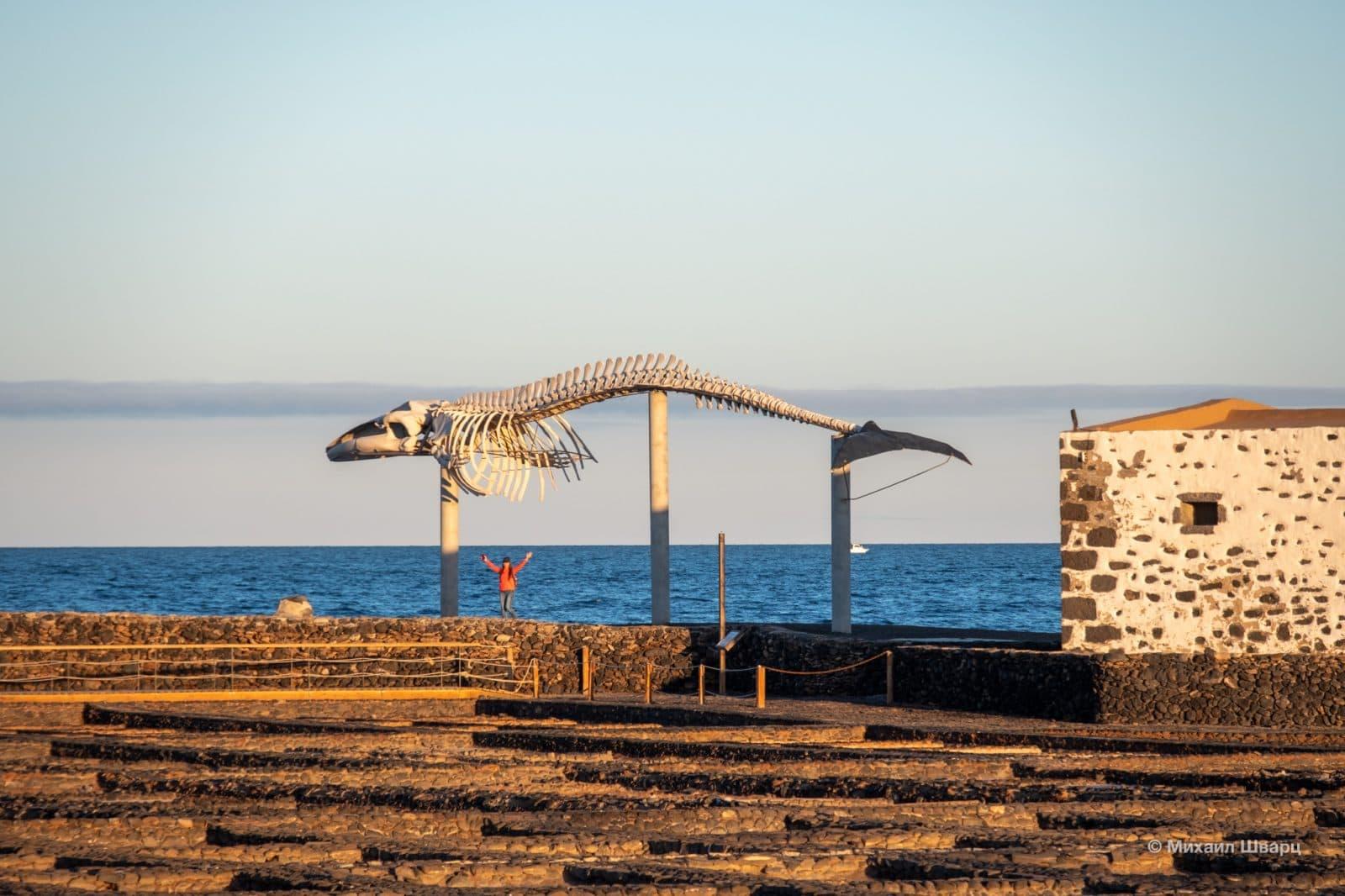 Скелет кита около музея соли