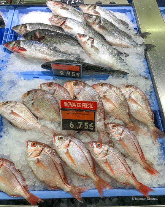 Зубан и Antoñito – канарские рыбки